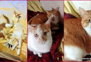 Paka-wa-africa-home-for-two-wonderful-cats-urgently-needed
