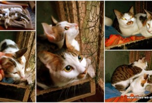 Two-lovely-and-stunning-beautiful-cats-found-their-way-to-paka-wa-africa-and-are-desperate-for-a-new-loving-home