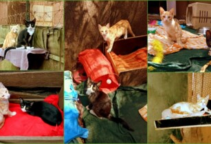 Paka-wa-africa-two-young-tomcats-need-a-home