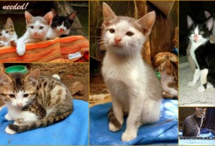 Paka-wa-africa-kittens-looking-for-a-loving-home