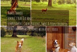 MBWA WA AFRICA – URGENT-URGENT-URGENT! Beautiful female dog in need of a good home!